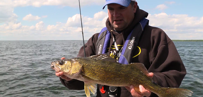 Early Season Lake Winnie Walleye
