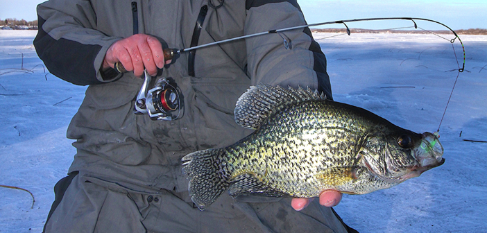 Soft Plastic Insights for Crappie