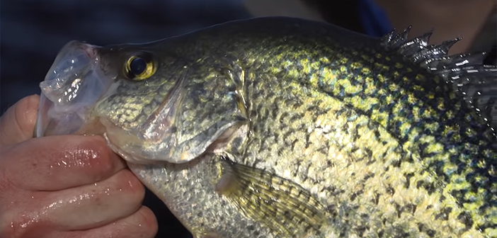 North Dakota Reservoir Crappie